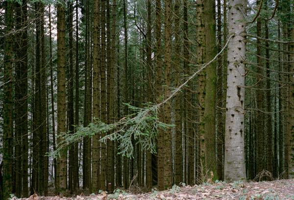 30.turano tree 2