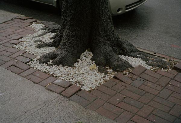 41.tree marciapiede 2